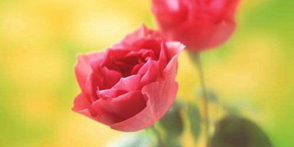 Всемирный день матери