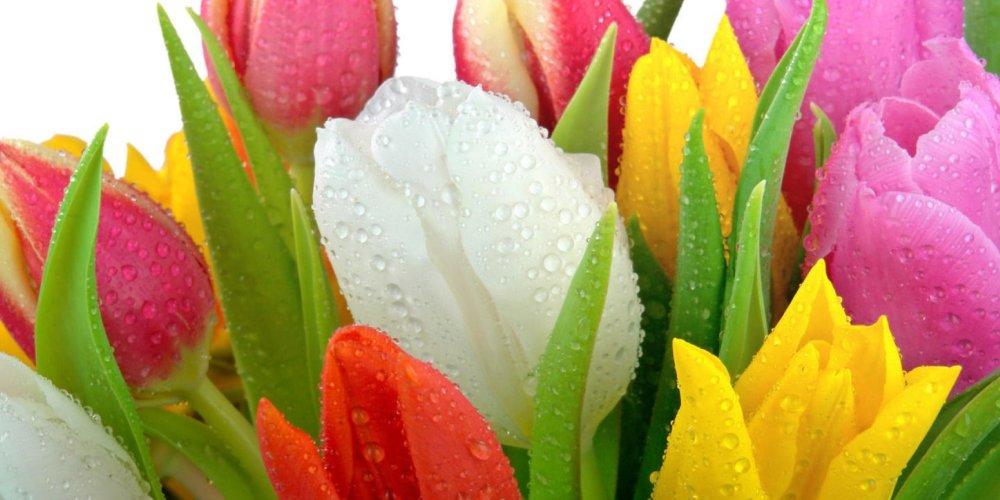 Искусство преподнести в подарок цветы