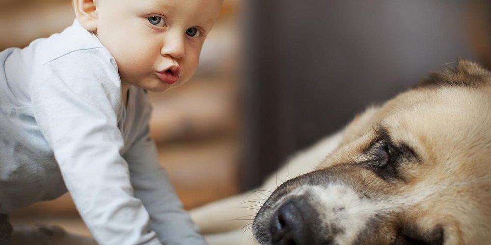 Нужно ли ребенку общение с собакой