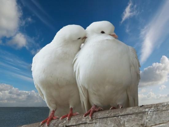 14 февраля – праздник для любящих сердец (2)
