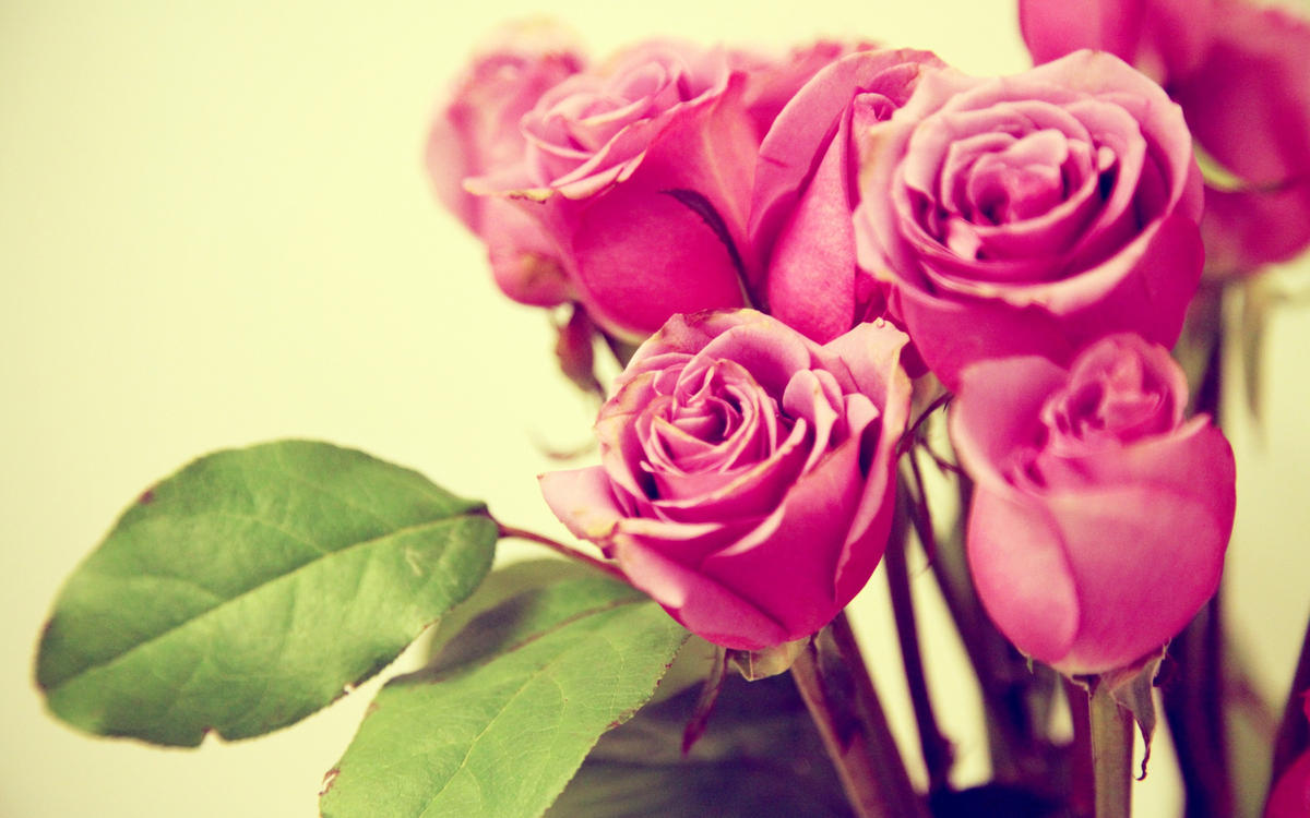 Дарим цветы женщинам