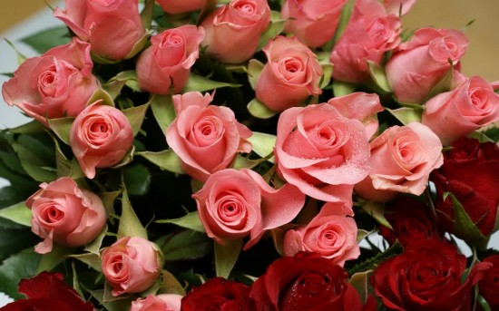 Лучшие цветы для подарка3