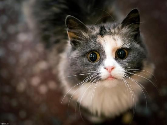 Определение возраста кошки