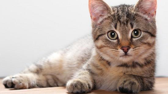 Определение возраста кошки3